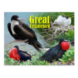 Gran Frigatebird, atolón intermediario, islas hawa Tarjetas Postales