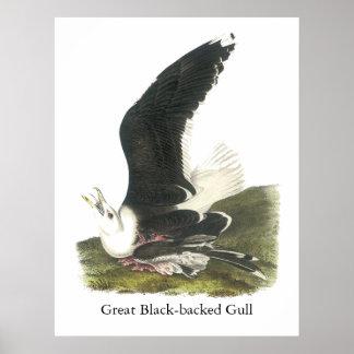 Gran gaviota de espalda negra, Juan Audubon Impresiones