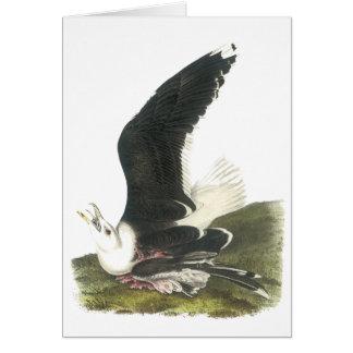 Gran gaviota de espalda negra, Juan Audubon Tarjetas