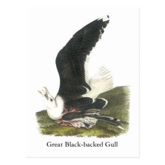 Gran gaviota de espalda negra, Juan Audubon Postal