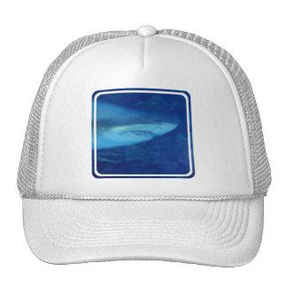 Gran gorra de béisbol del tiburón blanco