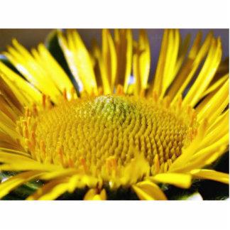 Gran imagen amarilla grande de la macro de la flor esculturas fotográficas