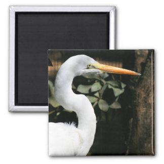 Gran imán blanco del Egret