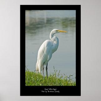 Gran impresión blanca del poster del Egret