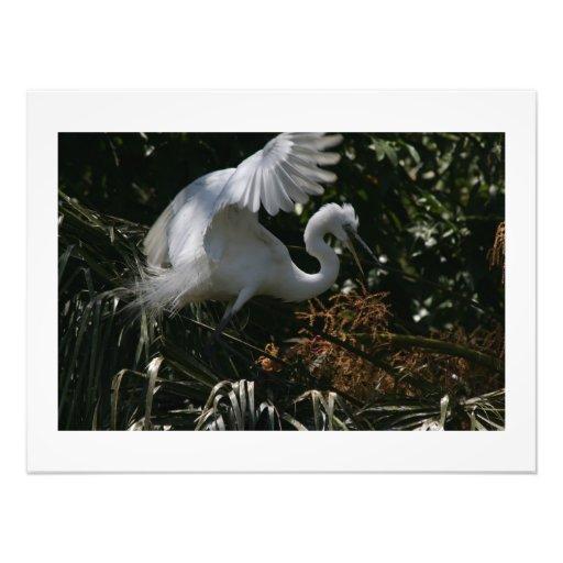 Gran impresión de la fotografía del pájaro del cojinete