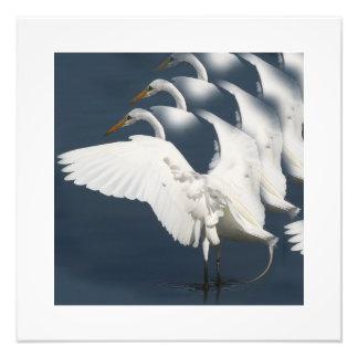 Gran impresión de la fotografía del pájaro del Egr