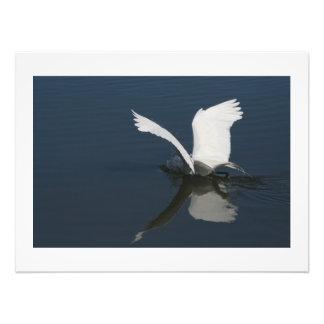 Gran impresión de la fotografía del pájaro del arte fotográfico