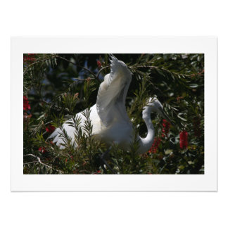 Gran impresión de la fotografía del pájaro del impresiones fotograficas
