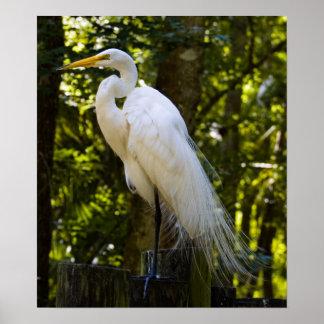Gran impresión del Egret Impresiones