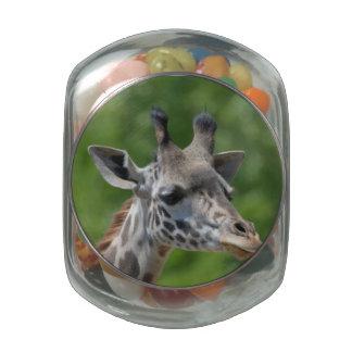 Gran jirafa frascos cristal