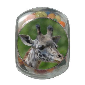 Gran jirafa jarrones de cristal