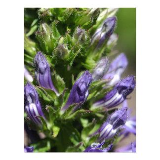 Gran Lobelia azul (siphilitica del Lobelia) Membretes Personalizados
