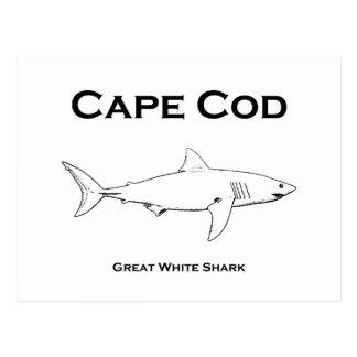 Gran logotipo del tiburón blanco de Cape Cod Tarjetas Postales