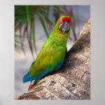 Gran macaw verde en un árbol impresiones