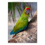 Gran macaw verde en un árbol tarjeta