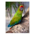 Gran macaw verde en un árbol tarjeta postal