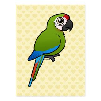 Gran Macaw verde Postales