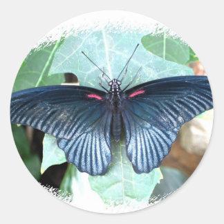 Gran mariposa Mormón-Tropical Pegatina Redonda