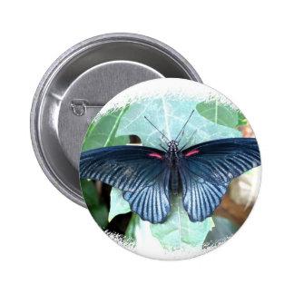 Gran mariposa Mormón-Tropical Pin Redondo 5 Cm
