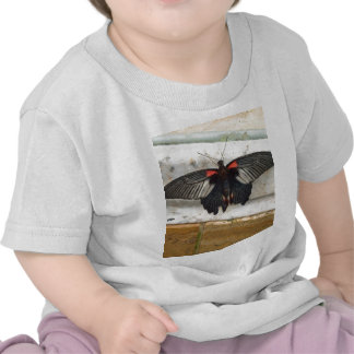Gran mariposa mormona camiseta
