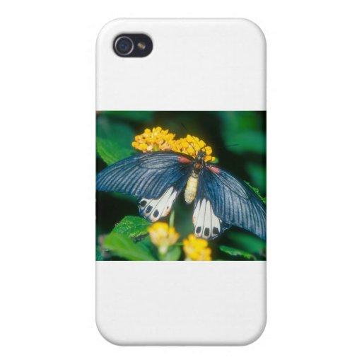 gran mariposa mormona de las mariposas iPhone 4/4S carcasa