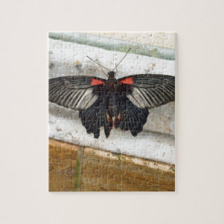 Gran mariposa mormona puzzle