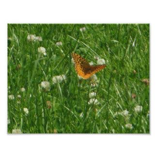 Gran mariposa Spangled del Fritillary Fotografía