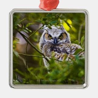 Gran Owlet de cuernos Adorno Para Reyes