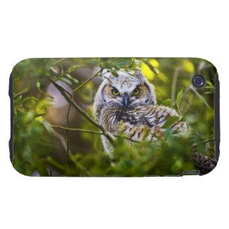 Gran Owlet de cuernos iPhone 3 Tough Carcasa