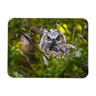 Gran Owlet de cuernos Imanes Flexibles
