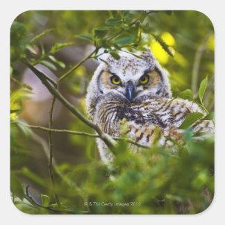 Gran Owlet de cuernos Calcomania Cuadradas Personalizadas