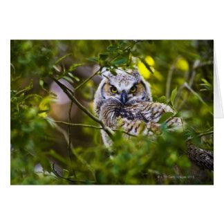 Gran Owlet de cuernos Tarjeta De Felicitación