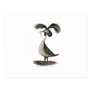 gran pájaro salvaje del grebe con cresta, postal