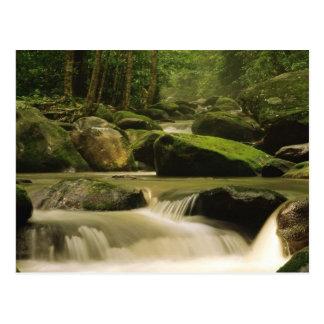 Gran parque nacional de la montaña ahumada, TN 2 Tarjeta Postal