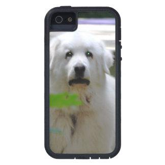 Gran perro blanco de los Pirineos iPhone 5 Case-Mate Protectores
