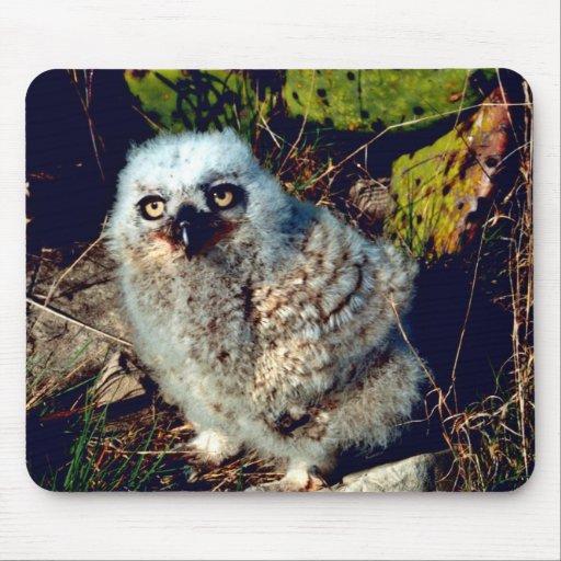 Gran polluelo del búho de cuernos mouse pads