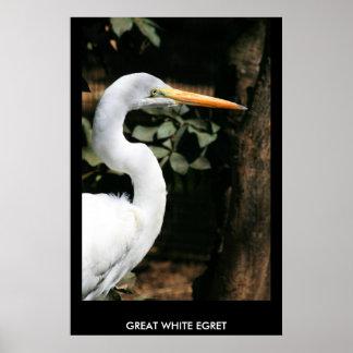 Gran poster blanco del Egret, impresión