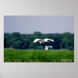 Gran poster del Egret en vuelo -