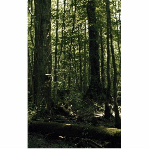 Gran reserva triste del nacional del pantano fotoescultura vertical