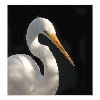 Gran retrato blanco del Egret Arte Con Fotos