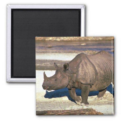 Gran rinoceronte Uno-De cuernos indio Iman De Frigorífico
