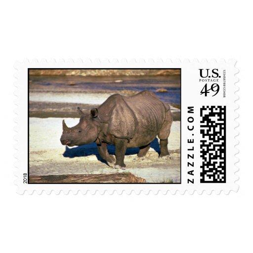 Gran rinoceronte Uno-De cuernos indio Sellos
