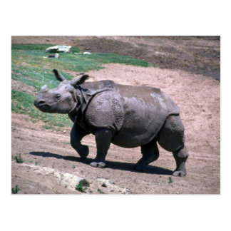 Gran rinoceronte Uno-De cuernos indio Tarjetas Postales