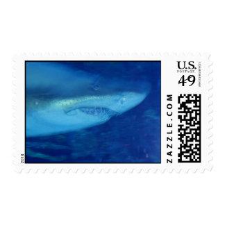 Gran sello del tiburón blanco