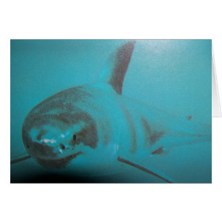 Gran tarjeta del tiburón blanco