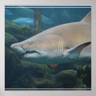 Gran tiburón blanco asustadizo