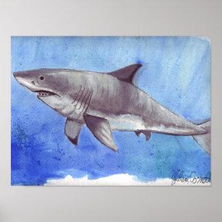 Gran tiburón blanco de la acuarela póster