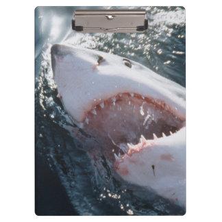 Gran tiburón blanco en el mar