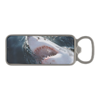Gran tiburón blanco en el mar abrebotellas magnético