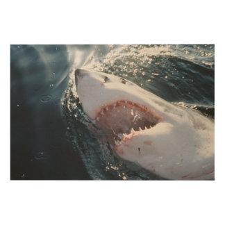 Gran tiburón blanco en el mar impresión en madera